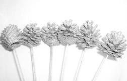 серебр ели конуса Стоковые Изображения