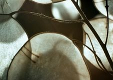 серебр камеди доллара Стоковые Фото