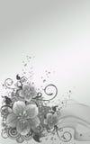 серебр цветков Стоковое Изображение RF