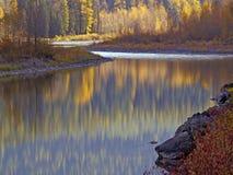 середина вилки цветов Стоковая Фотография