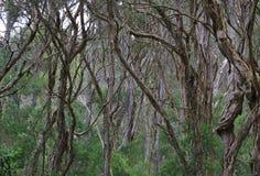 Середина леса с сериями деревьев стоковое изображение rf