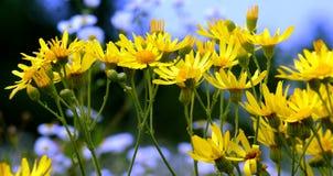 Середина лета богата в разнообразие ярких цветах Стоковое фото RF