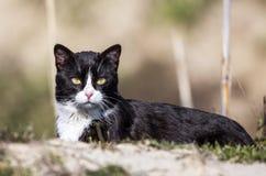 Середина смотря черного кота стоковые изображения rf