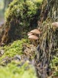 Серии грибов Стоковые Изображения