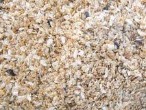 Серии естественной предпосылки небольших раковин на песке стоковое изображение