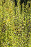 Серии зеленых листьев Стоковая Фотография RF