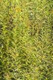 Серии зеленых листьев Стоковое Фото