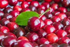 Серии зрелого красного выбора вишни Стоковое Фото