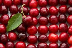 Серии зрелого красного выбора вишни Стоковое Изображение