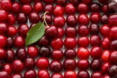 Серии зрелого красного выбора вишни Стоковые Фотографии RF