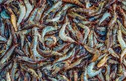 Серии свежей сырцовой креветки моря стоковое изображение rf
