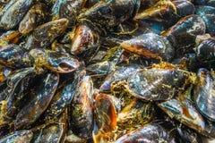 Серии свежих мидий моря Концепция продукта моря Стоковое Фото