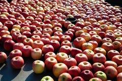 Серии яблок стоковое изображение rf