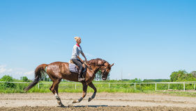 серии riding лошади девушки чертежа vector западное одичалое Стоковые Изображения