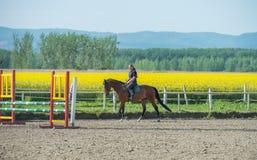 серии riding лошади девушки чертежа vector западное одичалое Стоковая Фотография