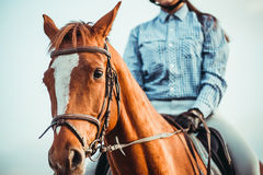 серии riding лошади девушки чертежа vector западное одичалое Стоковые Фотографии RF