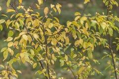 Серия ветвей с желтым цветом и зеленым цветом выходит в лес Стоковое Фото