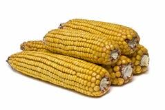 серия высушенная corncobs изолированная Стоковое Изображение
