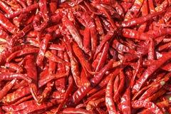 Серия высушенного chili как предпосылка еды Стоковые Фотографии RF