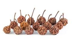 Серия высушенных маленьких груш Стоковые Фотографии RF