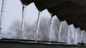 Серия длинных тонких плавя сосулек на крыше акции видеоматериалы