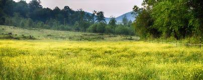 ` Серия ` желтых цветов Американа поле ярких желтых цветков в предгорьях завальцовки Стоковые Изображения RF