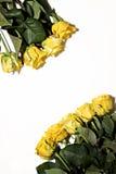 Серия желтых роз на белой предпосылке Стоковые Изображения