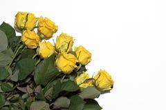 Серия желтых роз на белой предпосылке Стоковая Фотография