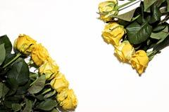 Серия желтых роз на белой предпосылке Стоковые Изображения RF