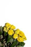 Серия желтых роз на белой предпосылке Стоковое Фото