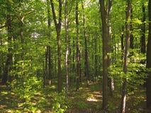 Серия зеленых деревьев Стоковые Изображения