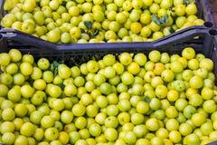 Серия зрелых сочных зеленых яблок Стоковая Фотография