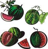 серия иллюстрации плодоовощ Стоковые Изображения RF