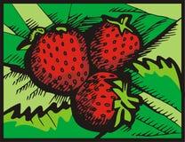 серия иллюстрации плодоовощ Стоковая Фотография RF