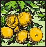 серия иллюстрации плодоовощ Стоковое Изображение RF