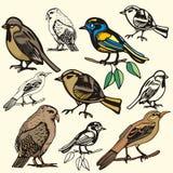 серия иллюстрации птицы иллюстрация вектора