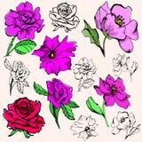 серия иллюстрации цветка Стоковые Фото