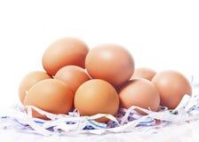 Серия коричневых яичек на белой предпосылке Стоковые Фото