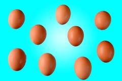 Серия коричневых яичек цыпленка Стоковое Изображение