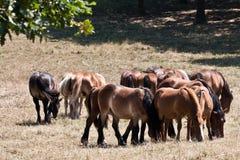 серия лошадей Стоковое Изображение