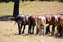 серия лошадей Стоковые Изображения