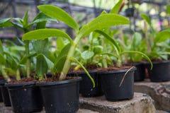 Серия малой орхидеи цветет в пластичных баках Стоковые Фотографии RF