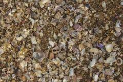 серия небольших раковин различных форм, цветов и размеров конца-вверх, взгляда сверху естественная текстура текстуры стоковое изображение rf