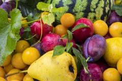 Серия осени плодоовощ Стоковое Изображение