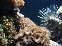 серия подводная стоковое фото
