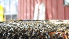 Серия пчел на улье акции видеоматериалы
