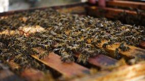 Серия пчел на улье видеоматериал