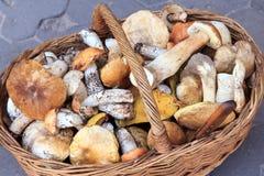Серия различных грибов в плетеной корзине и нержавеющей стали Стоковое Фото