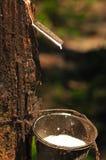 серия резины плантации стоковое изображение