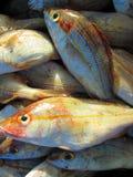 Серия свежих рыб Стоковая Фотография